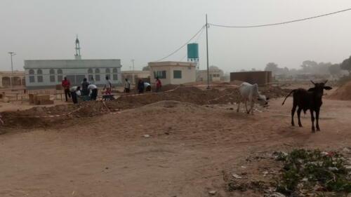 Un chantier au milieu des vaches !